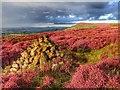 NZ5001 : Live Moor by Mick Garratt