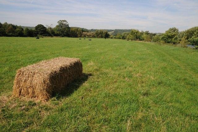 A straw bale in a silage field