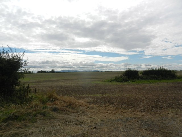 A field at Butterlaw Farm