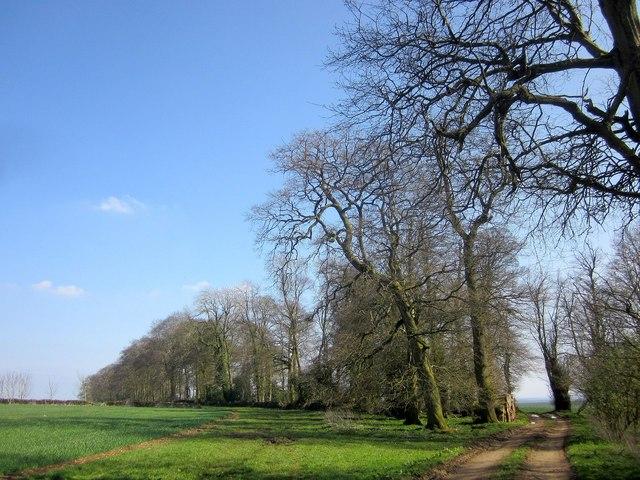 Bridleway to Yanworth