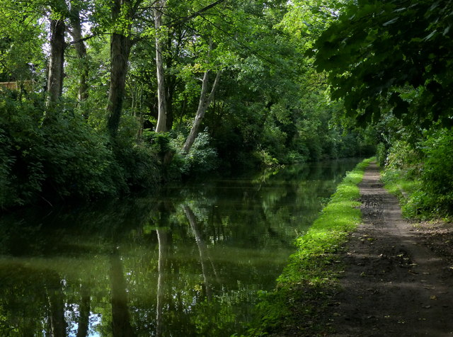 Wooded stretch of the Grand Union Canal