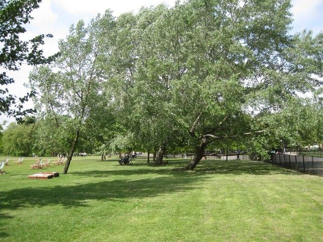 White Poplars, northeast corner of Hyde Park, near Speakers' Corner, London W2