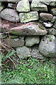 NY5907 : Benchmark on stone in wall NW of High Scales by Roger Templeman