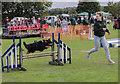 SK8770 : Dog agility at Harby Show by Julian P Guffogg