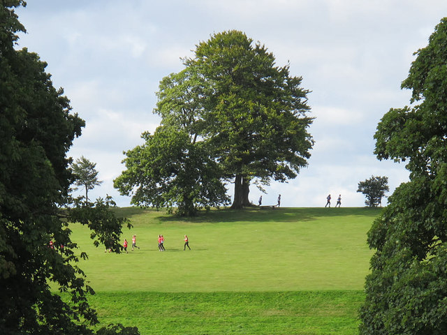 Park runners on the skyline
