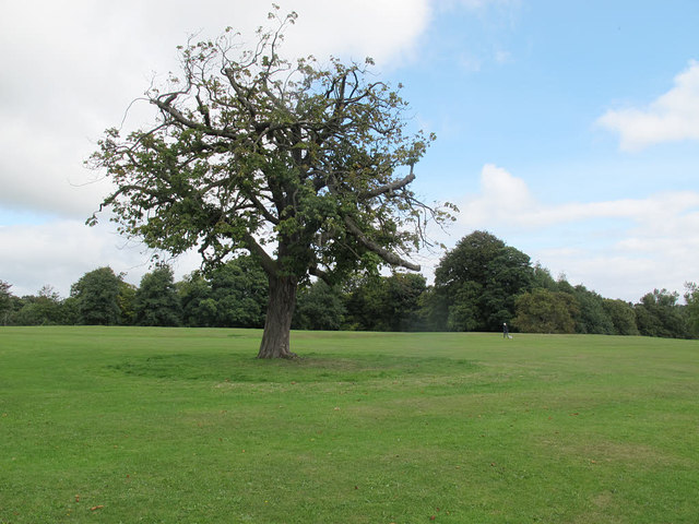 Solitary tree in Roundhay Park