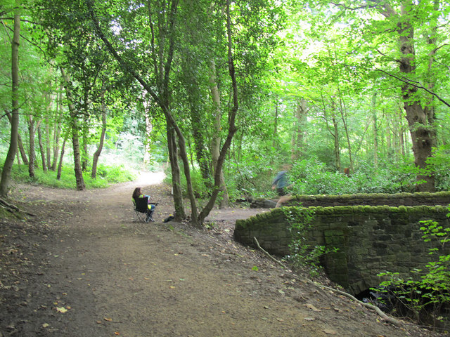 Path junction in Great Heads Wood