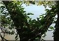 SX8257 : Ferns by the Dart by Derek Harper