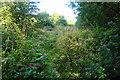 SD7204 : Path to Farnworth by Bill Boaden