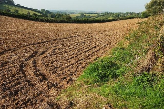 Ploughed field, Wringworthy