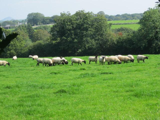 Cae ger Betws Fawr - Field near Betws Fawr