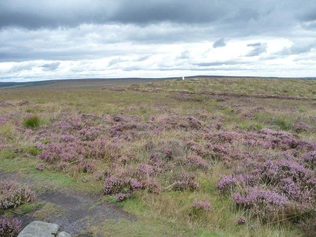 Flowering heather on Big Moor