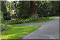 SU8163 : Wellingtonia Avenue by Alan Hunt