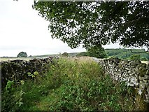 SK2076 : Overgrown farm track heading north from Tideswell Lane by Christine Johnstone