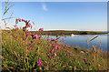 HU5279 : Wild Flowers, Burra Voe by Des Blenkinsopp