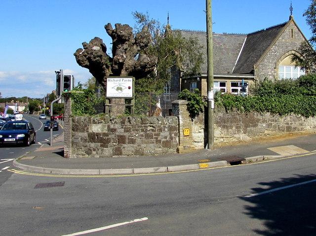 Pollarded tree on a Shanklin corner