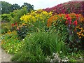 ST3918 : Autumn colour in a herbaceous border, Barrington Court Estate by Robin Drayton