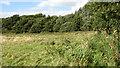 TG4114 : Dovehouse Plantation by Evelyn Simak