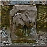 SO4430 : Kilpeck: The church of St. Mary and St. David: The dog and hare corbel by Michael Garlick
