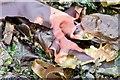 J4181 : Seaweed, Cultra - September 2015(3) by Albert Bridge