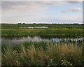 TL3773 : Ouse Fen RSPB reserve by Hugh Venables