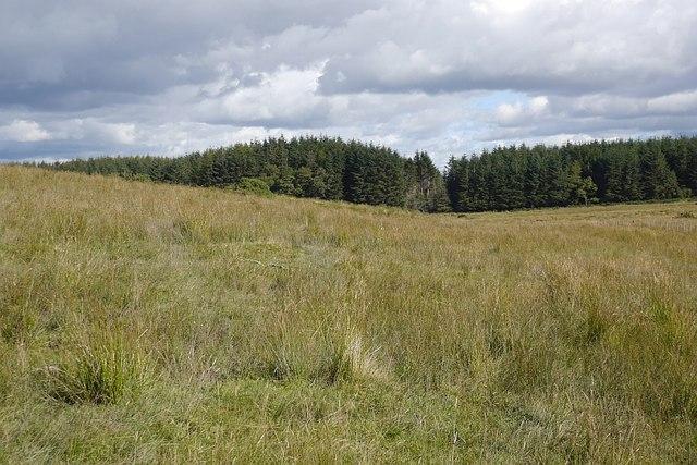 Rough grazing, Ballochleam