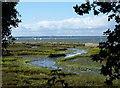 SZ7799 : Mudflats and tidal creeks at Ella Nore by Rob Farrow