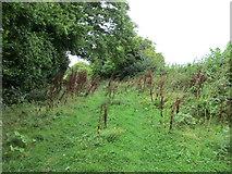 SX8878 : Former road near Ideford by Jonathan Thacker