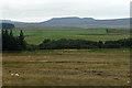 NZ0493 : Grassland near Fontburn Reservoir (6) by Stephen Richards
