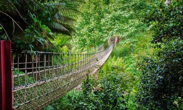 The Lost Gardens of Heligan Rope Bridge