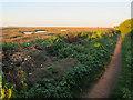 TF7944 : Norfolk Coast Path by Hugh Venables