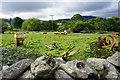 SH6268 : Sheep and discarded farm equipment by Tal-y-sarn by Bill Boaden
