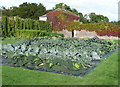 SE3044 : Brassica bed in the walled garden by Humphrey Bolton