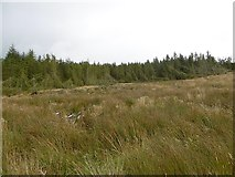 NY5484 : Clearfell, Kershope Forest by Richard Webb