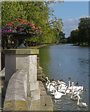 TL0549 : The Great Ouse at Bedford by Paul Harrop