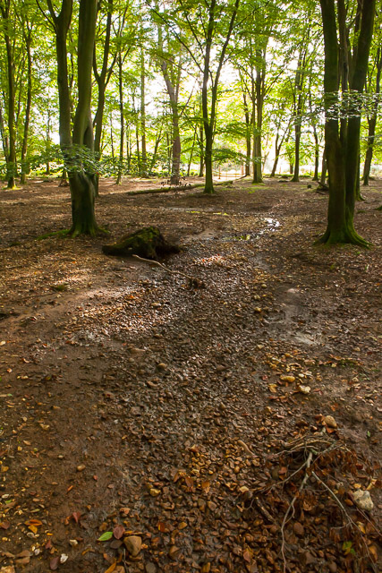 Newly raised stream bed, in Broomy Inclosure