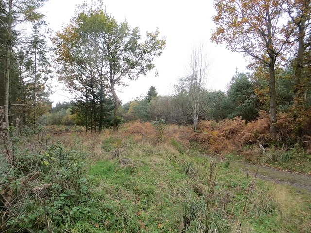 Road, Bury Ditches