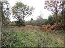 SO3283 : Road, Bury Ditches by Richard Webb
