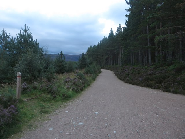 Track in Glenmore Forest
