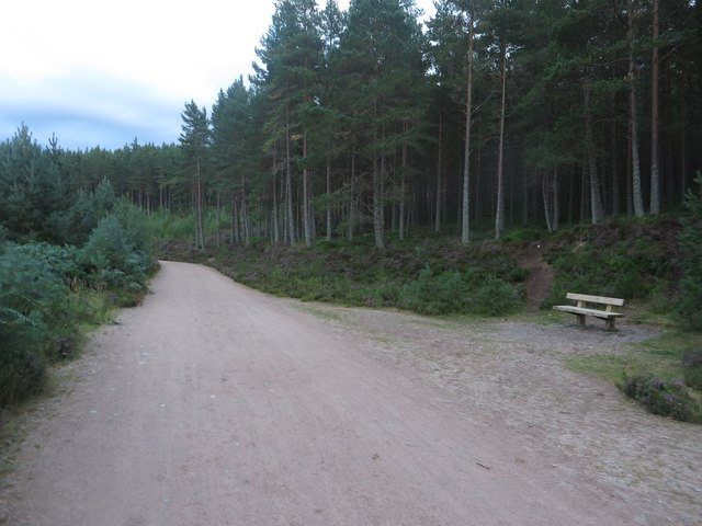 Bench beside a forest track in Glenmore Forest