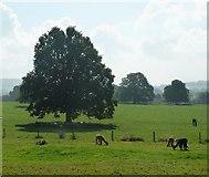 SP0327 : Sudeley Castle - Alpacas by Rob Farrow