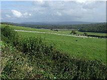 SD4577 : Grazing near Arnside Knott by JThomas