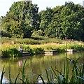 SP2964 : Early morning angling, Kingfisher Pool, Myton Fields, Warwick by Robin Stott