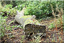 J4078 : Fallen tree, Glenlyon, Holywood (September 2015) by Albert Bridge