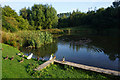 SD8631 : Ducks by Deer Pond by Bill Boaden