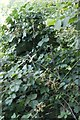 SP6006 : Cross in the Blackberries by Bill Nicholls