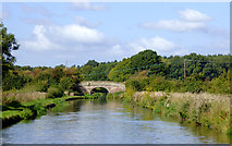 SJ8021 : Shropshire Union Canal west of Gnosall, Staffordshire by Roger  Kidd