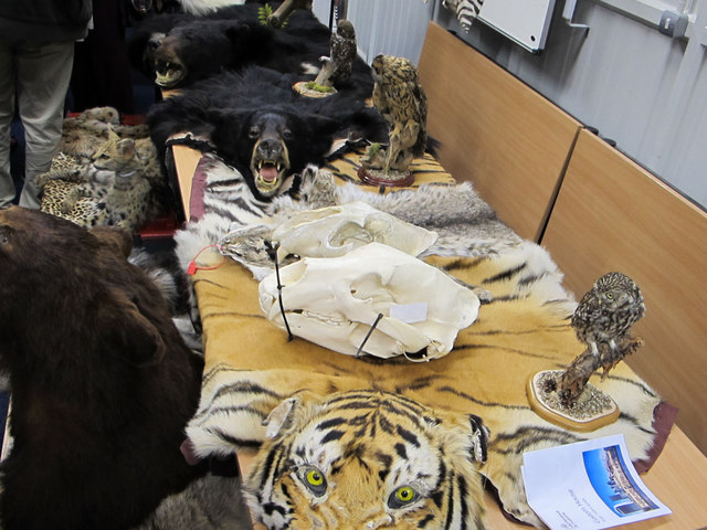 Endangered animal fur and bone, Custom House