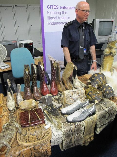 Illegal crocodile, turtle etc products, Custom House