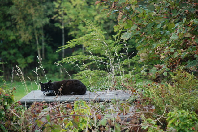 Cath ar fedd - A cat on a grave